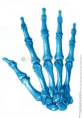 HAND  ILLUSTRATION Illustration