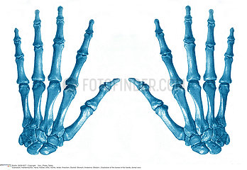 HAND  ILLUSTRATION Illustration