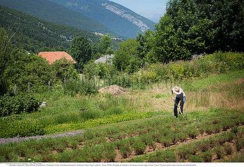 Reportage Arzneipflanzenanbei/HERBALIST