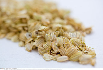 Don quai seeds