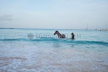 Pferde baden im Meer
