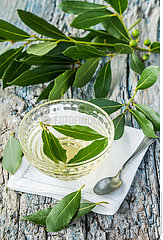 Phytotherapy