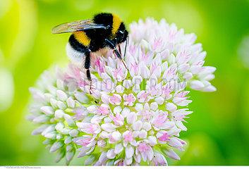 yahoo7/5000Bumblebee