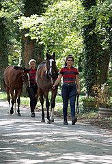 Gestuet Westerberg  Pferde werden einen Asphaltweg entlang gefuehrt