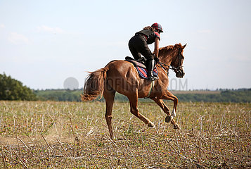 Gestuet Westerberg  Maedchen reitet auf ihrem Pferd ueber ein Stoppelfeld