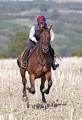 Gestuet Westerberg  Frau reitet auf ihrem Pferd ueber ein Stoppelfeld