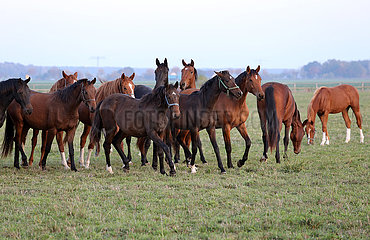 Gestuet Graditz  Pferde auf einer Weide