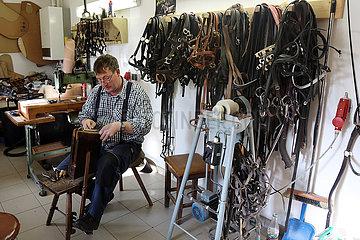Gestuet Graditz  Pferdewirt repariert in der Sattelkammer ein Lederhalfter
