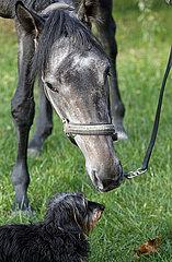Neuenhagen  Pferd und Hund beschnuppern sich