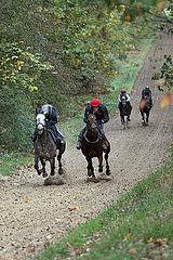 Neuenhagen  Pferde und Reiter bei der Morgenarbeit auf der Bollensdorfer Trainierbahn. Sunnylea mit Friederike Schloms (links)