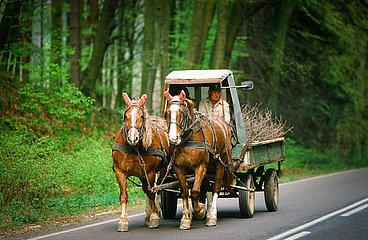 Pferdefuhrwerk auf einer Landstrasse