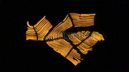 CHINA-GUIZHOU-AGRICULTURE-DRAGON FRUIT-Beleuchtung mit künstlichem Licht (CN)