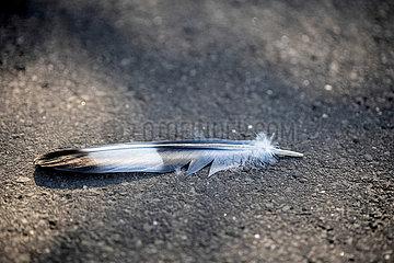 Vogelfeder