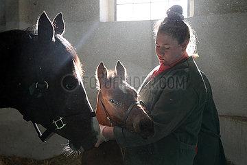 Gestuet Goerlsdorf  Pferdepflegerin kuemmert sich in einer Box um Stute und Fohlen