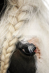 Schuenow  Maehne eines Pferdes ist wegen einer akuten Bindehautentzuendung zu einem Zopf geflochten