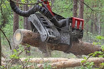 Doebrichau  Deutschland  Baumstamm wird vom Arbeitskopf eines Harvesters zerteilt