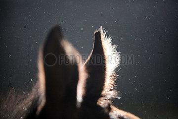 Schuenow  Staubpartikel schweben in der Luft eines Pferdestalles