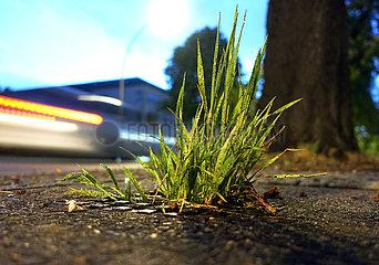 Berlin  Deutschland  Gras waechst aus einem Kanaldeckel