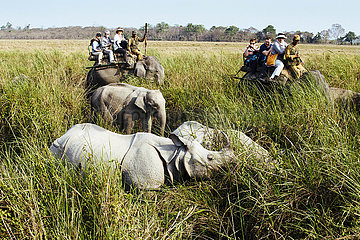Kaziranga Nationalpark