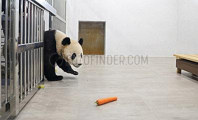 CHINA-LIAONING-ANSHAN-PANDA-NEW HOME (CN)