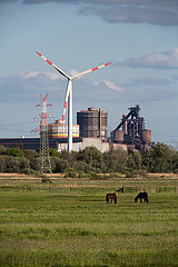 Deutschland  Bremen - ArcelorMittal-Stahlwerk  Windrad  Strommast und Pferde auf der Weide