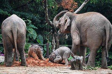 CHINA-GUANGDONG-GUANGZHOU-Asiatische Elefanten-Schätzchenelefanten (CN)