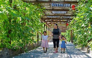 CHINA-HEBEI-HANDAN-Living Environment-VERBESSERUNG (CN)