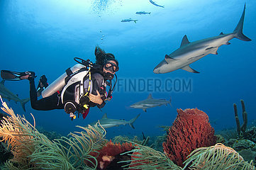 Scuba diver swimming with Caribbean reef shark (Carcharhinus perezi) over a Giant barrel sponge (Xestospongia muta)