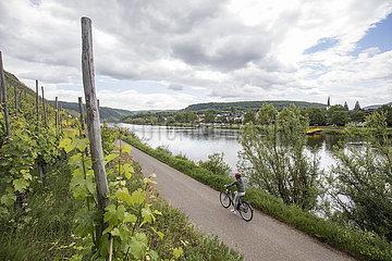 Radfahrer zwischen Reil und Pünderich an der Mosel