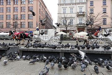 Krakau  Polen  Taubenplage in der Innenstadt