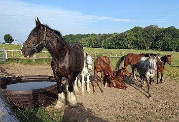 Gestuet Goerlsdorf  Pferde stehen auf einer Weide neben einem Bottich mit Wasser
