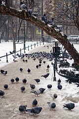 Krakau  Polen  Tauben in einer Parkanlage