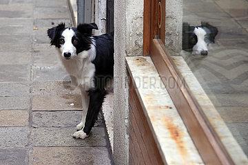 Venedig  Italien  Hund schaut aus einem Hauseingang heraus