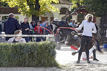 Dresden  Olinka ueberschlaegt sich mit Adam Florian auf dem Weg zum Gelaeuf. Pferd und Jockey sind danach wohlauf