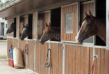 Magdeburg  Pferde schauen aus ihren Aussenboxen heraus