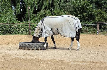 Mechtersen  Pferd mit Fliegendecke und Fliegenschutzmaske frisst auf einer Sandkoppel Heu aus einem Traktor-Reifen