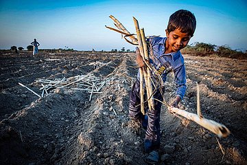 Kinderarbeit auf Zuckerrohrfeld
