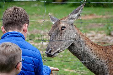 Tiere in Gefangenschaft