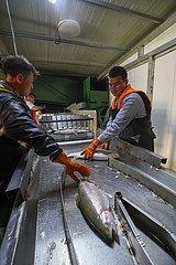 CHINA-XINJIANG-Nilka-COLD WATER Fischzucht-Armutsbekaempfung (CN)