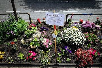 Urban Gardening - Urbaner Gartenbau