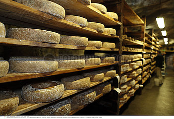 Artisanal Beaufort cheese in refining in a traditional cellar