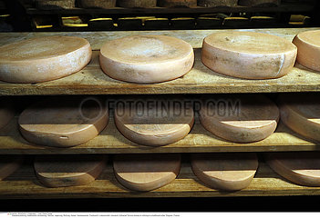 Artisanal Tomme cheese in refining in a traditional cellar