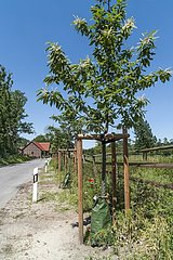 Bewässerungskonzept für Bäume