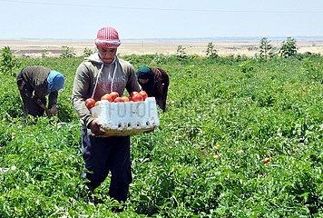SYRIA-DAMASCUS-FARMWORK
