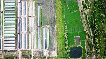 CHINA-HEILONGJIANG-WANGKUI COUNTY-POVERTY ALLEVIATION (CN)