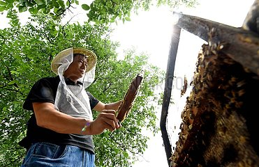 CHINA-HEBEI-BEEKEEPER (CN)