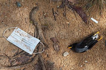Singapur  Republik Singapur  Weggeworfener Mundschutz und toter Vogel liegen im Dreck