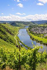 Marienburg ueber Weinbergen an der Mosel  Puenderich  Rheinland-Pfalz  Deutschland