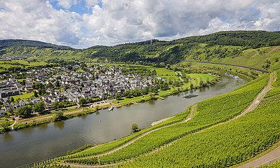 Weinberge an der Mosel  Puenderich  Rheinland-Pfalz  Deutschland