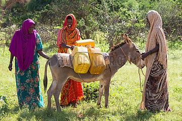 Gabradahidan  Somali Region  Aethiopien - Esel werden mit Wasserkanister beladen